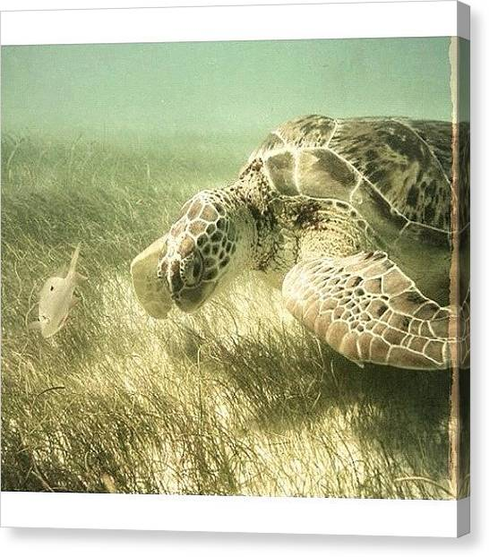 Sea Turtles Canvas Print - Old Picture From When I Went by Marisag ☀✌