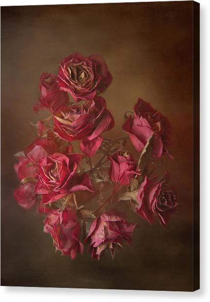 Old Roses Canvas Print by Karen Martin