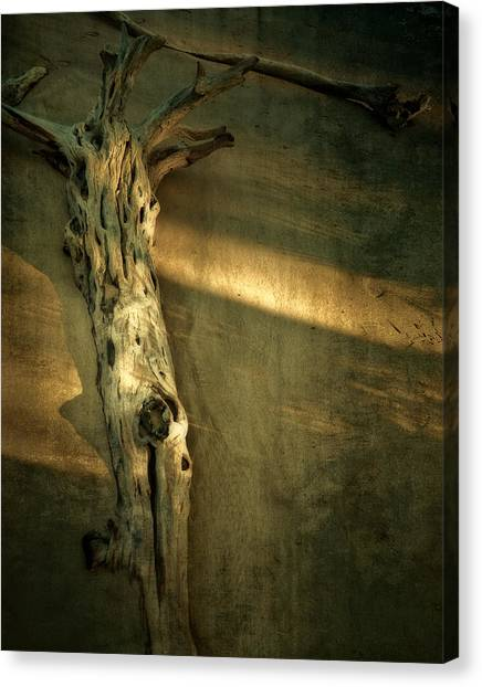 Old Tree In Sand Canvas Print