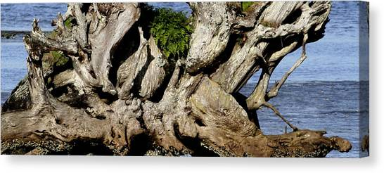 Old Tree  Canvas Print by Mary Gaines