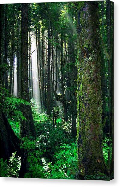 Olympic Forest Canvas Print by Ric Soulen