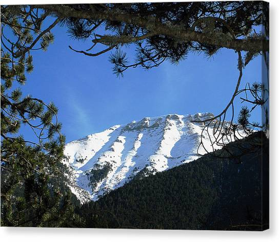 Olympos Through Firs Canvas Print by Andonis Katanos