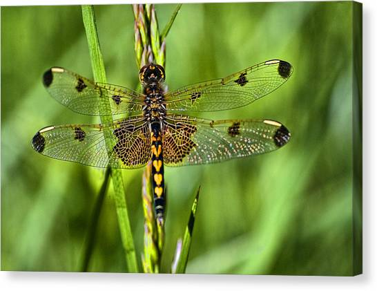 On Delicate Wings Canvas Print by Cheryl Cencich