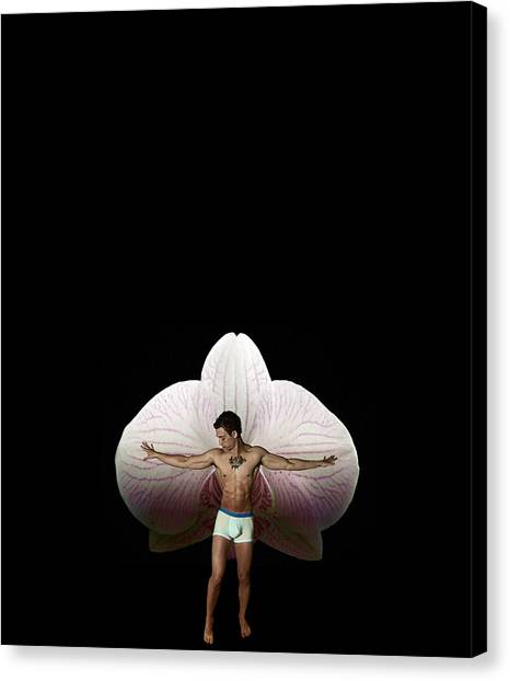 On Orchid Wings Canvas Print by Michael Taggart