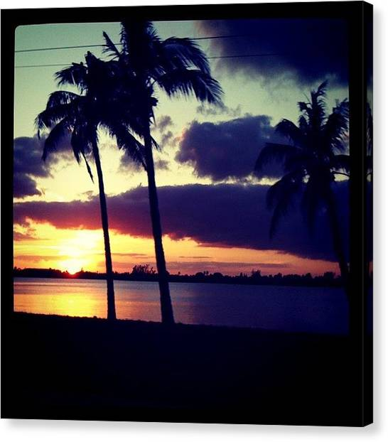 Palm Trees Sunsets Canvas Print - On The Drive Home The Other Day by Emily W