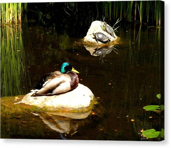 On The Rocks Canvas Print by Andrea Cullinane