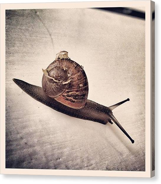 Spiral Canvas Print - On The Run! #snail #spiral #shell by Robert Campbell