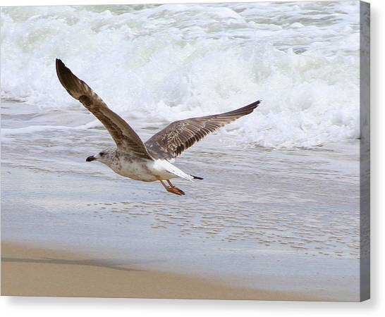 On The Wing At Nags Head Canvas Print by Paula Tohline Calhoun