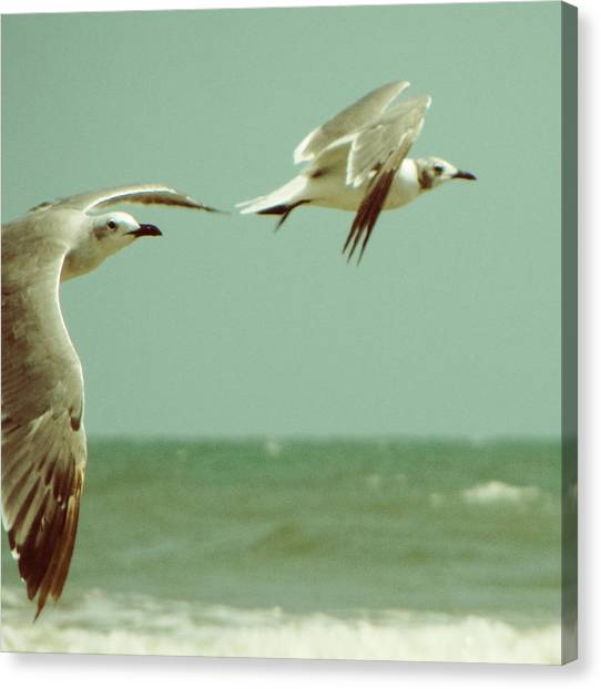 On The Wings Of A Seagull Canvas Print