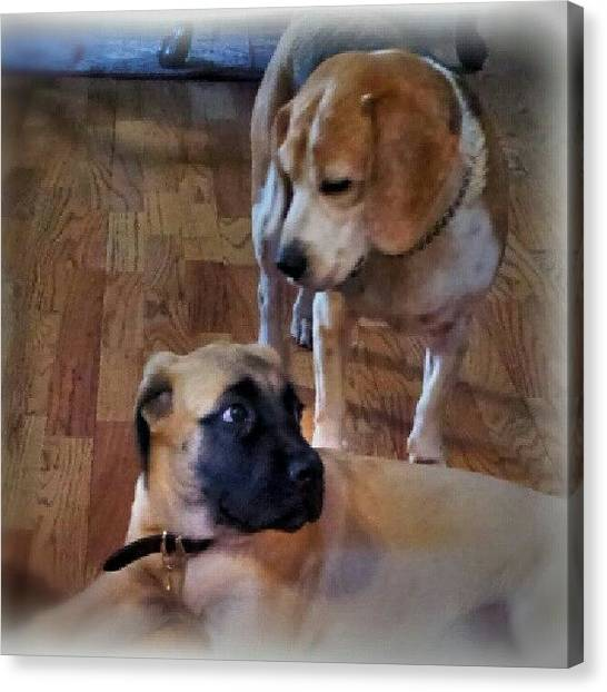 Mastiffs Canvas Print - On This Uncertain Note I Wish You All A by Julieta Garcia