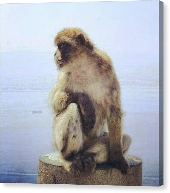 Apes Canvas Print - On Top Of The Rock by Lottie H