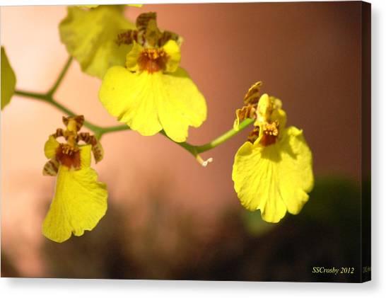 Oncidium Goldiana Orchid Canvas Print
