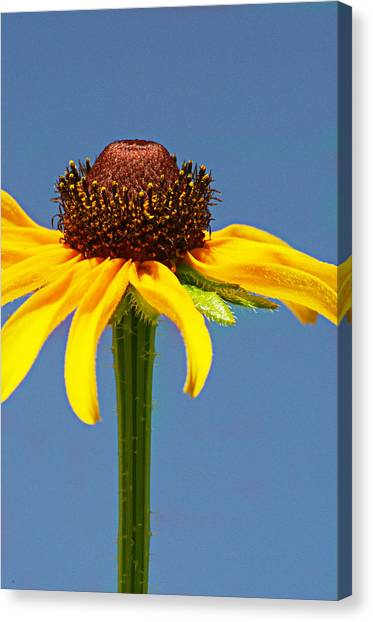 One Lone Flower Canvas Print by Michelle Armstrong
