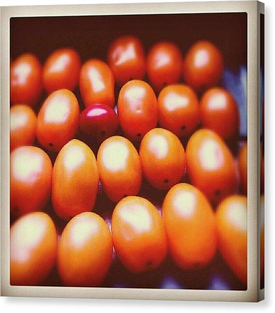 Tomato Canvas Print - One Of A Kind... #tomatoes #vegetables by Alexandra Cook