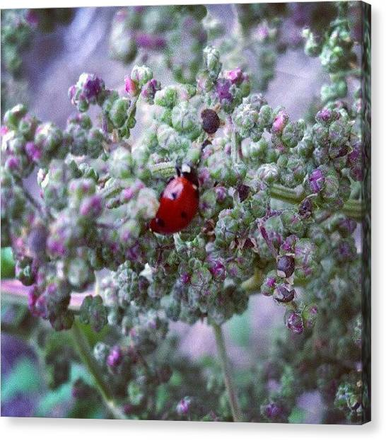 Ladybugs Canvas Print - One Of These Things Is Not Like The by Stephen Cooper
