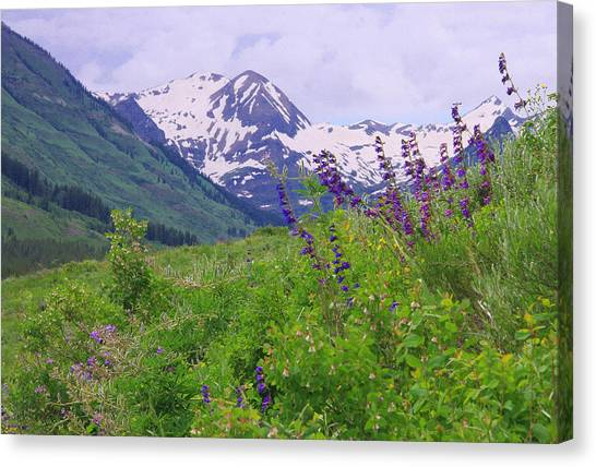One-sided Penstemon Canvas Print