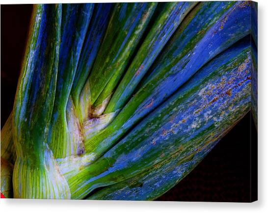 Onions Canvas Print by Michael Friedman