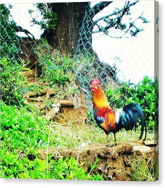 Roosters Canvas Print - Oooh The Wild Roosters & Chickens On by Jessica Daubenmire