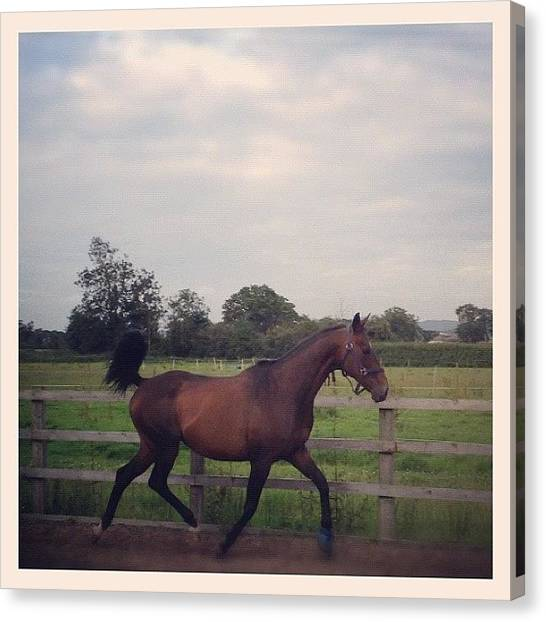Thoroughbreds Canvas Print - Oooohh Look At You! :* Swift #horses by Caitlin Hay