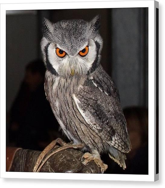 Owls Canvas Print - Ooooo Helloooo by Zoe Pile