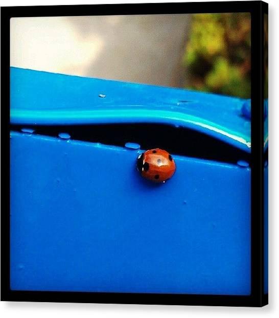 Ladybugs Canvas Print - Oops! I've #sneezed  #ladybug #bug by Raimon Rafols