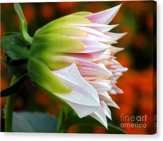 Open For Autumn Canvas Print by Christine Belt
