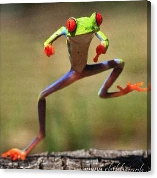 Korean Canvas Print - Oppa, Gangnam Style #funny #nature by Rola Ayubi