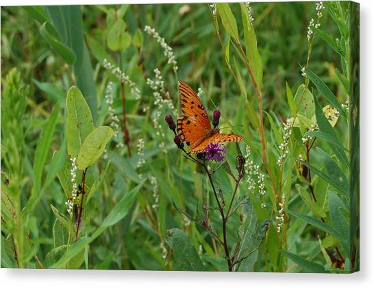 Orange Butterfly Canvas Print by Beverly Hammond