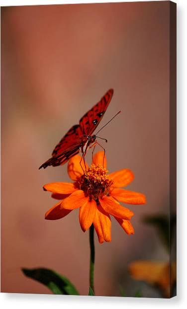 Orange Butterfly Orange Flower Canvas Print