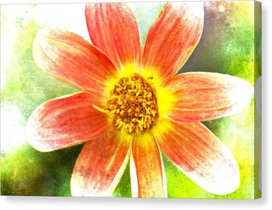 Dahlias Canvas Print - Orange Dahlia On Green by Carol Leigh