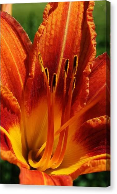 Orange Daylily Canvas Print by Bruce Bley