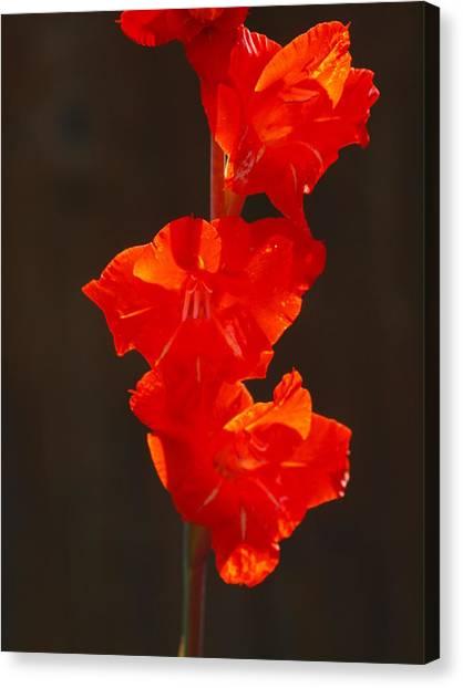 Orange Fire Canvas Print by Jim Moore