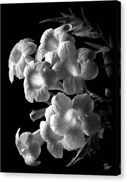 Orange Jubilee In Black And White Canvas Print