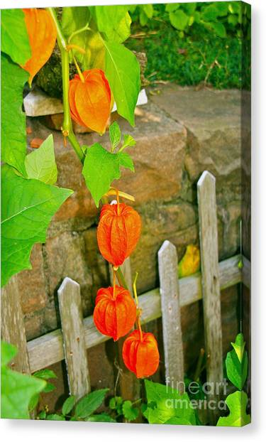 Orange Lanterns Canvas Print