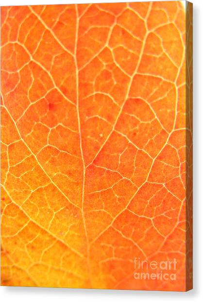 Orange Leaf Abstract Canvas Print by Mariah Stone