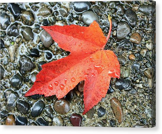 Orange Leaf Canvas Print