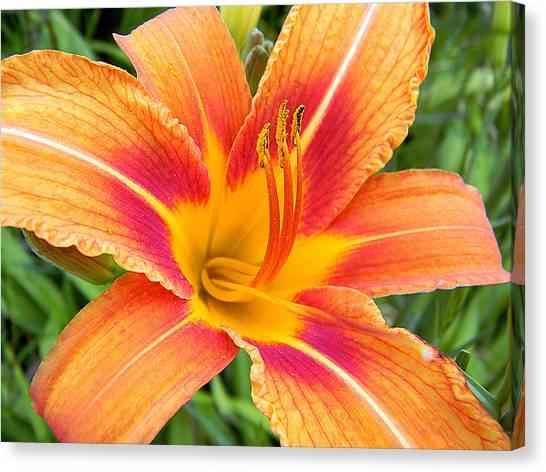 Orange Lily Canvas Print