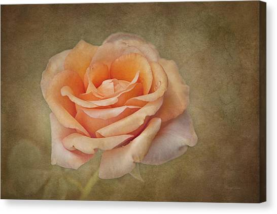Orange Sorbet Canvas Print
