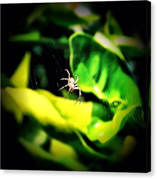Spiders Canvas Print - Orange Tree Visitor by S Michelle Reese