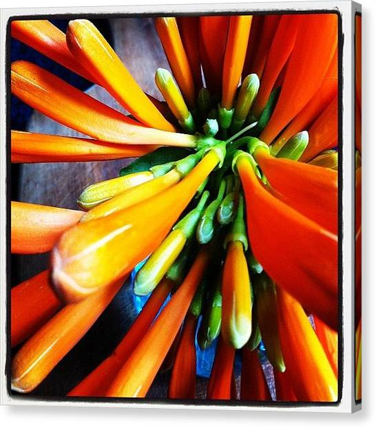 Wind Instruments Canvas Print - Orange Trumpets by Katie Alleva