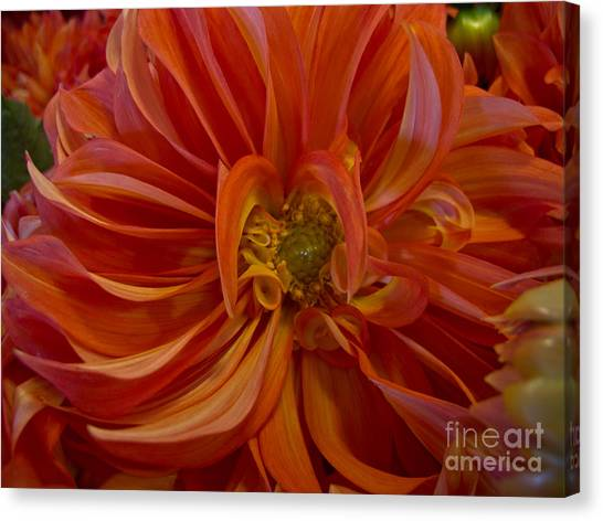 Orange You Happy Canvas Print