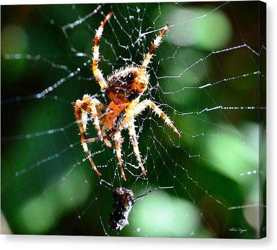 Orb Weaver And Lunch Canvas Print