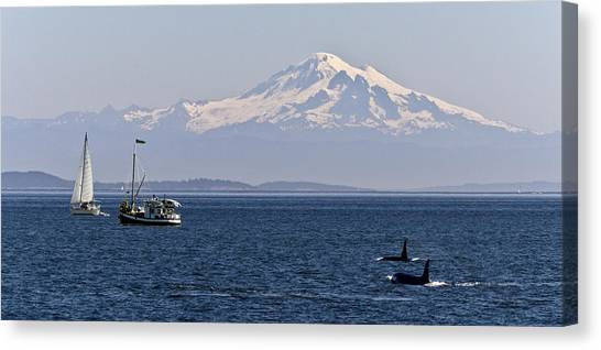 Orca's And Mt Baker Canvas Print