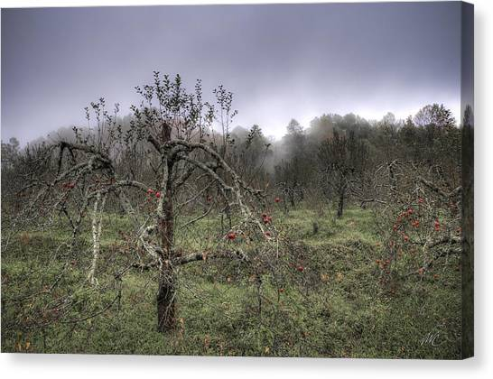Orchard At Altapass Canvas Print by Williams-Cairns Photography LLC