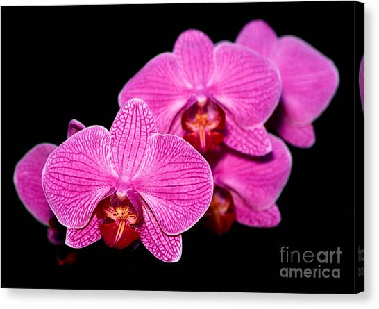 Orchid 17 Canvas Print