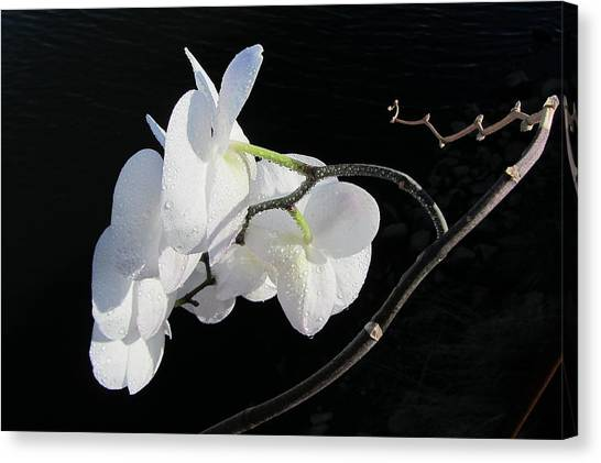 Orchid Above River Canvas Print