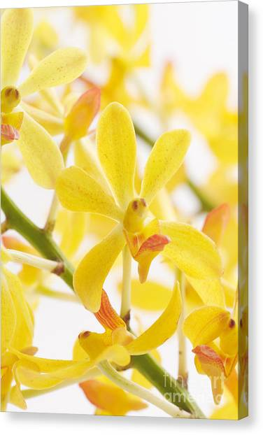 Health Care Canvas Print - Orchid Bunch by Atiketta Sangasaeng