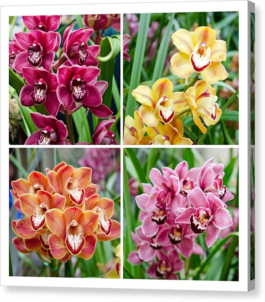 Canvas Print featuring the photograph Orchid Collage by Margaret Pitcher