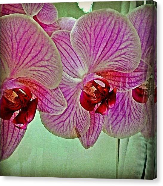 Orchids Canvas Print - #orchid by Eric Herrera