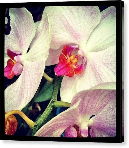 Orchids Canvas Print - #orchid #flower #beauty #photowall by A Loving